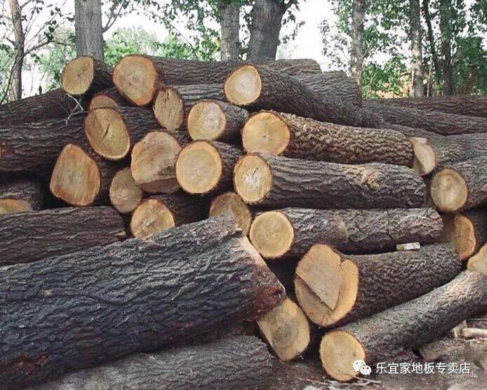 红橡木家具图片_松木、水曲柳、橡木、香樟木、榆木等这9大木种你真的了解吗?